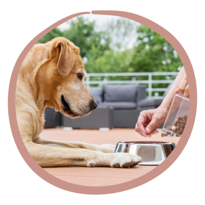 Ernährungsformen Hund