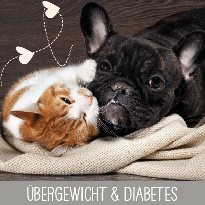 Übergewicht & Diabetes