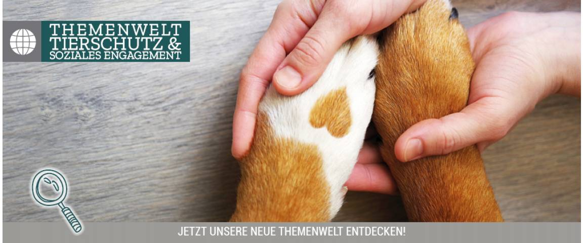 Home and Home Aktionsartikel Hundebetten