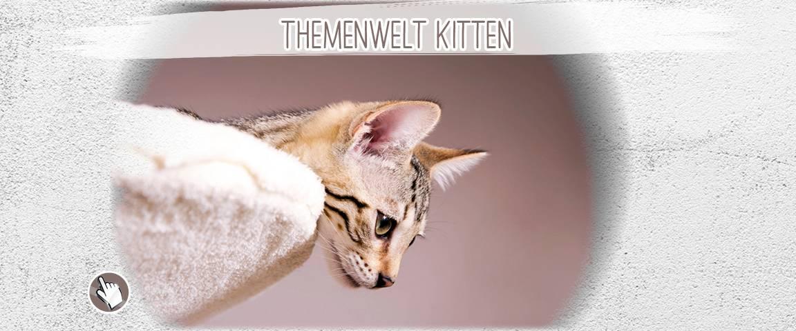 ONE Trockennahrung 800 g Kitten - 10 % Rabatt