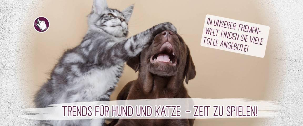Dr.Clauder´s Snack IT Lachscreme für Hunde 75 g- 2 + 1 Aktion