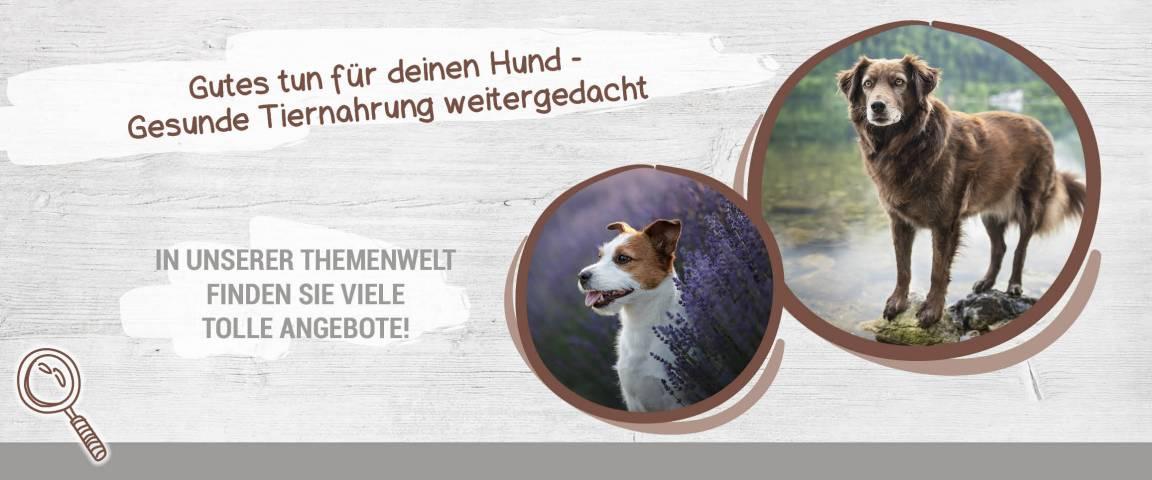 Themenwelt Goood - Gutes tun für Deinen Hund