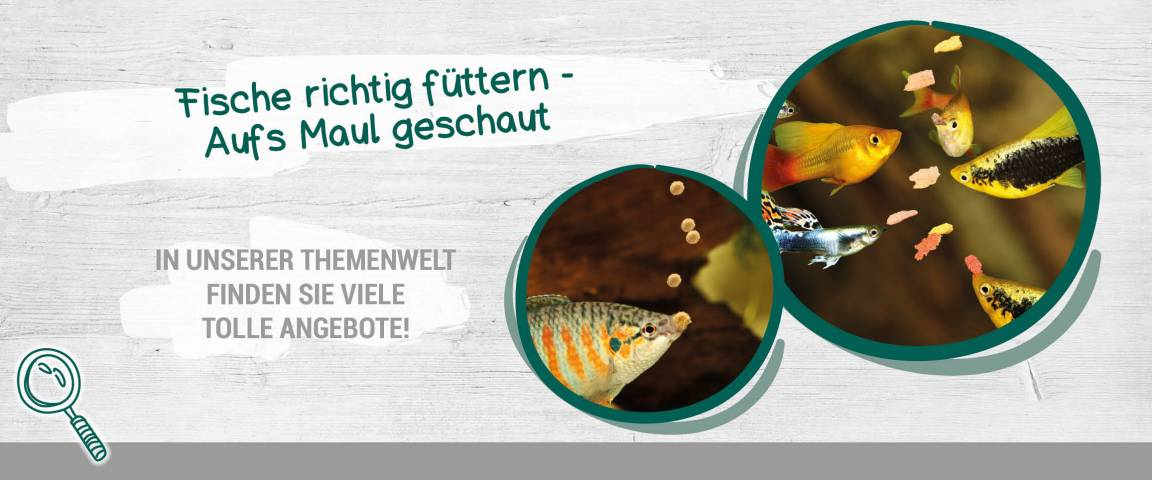 Tetra - Fischfutter