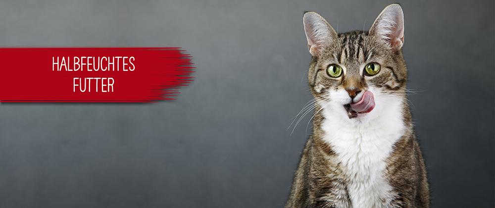 Halbfeuchtes Katzenfutter