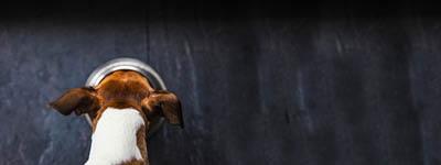 Hoher Frischfleischanteil im Hundefutter