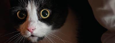 Ängste bei Katzen