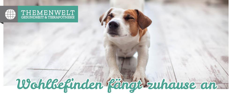 Hundeapotheke - Hundekrankheiten erkennen und vorbeugen