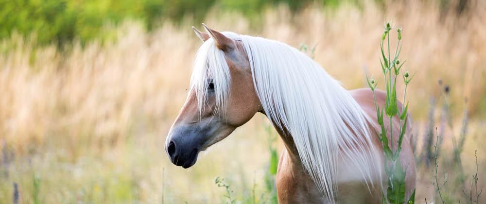 Versicherung für Pferdehalter