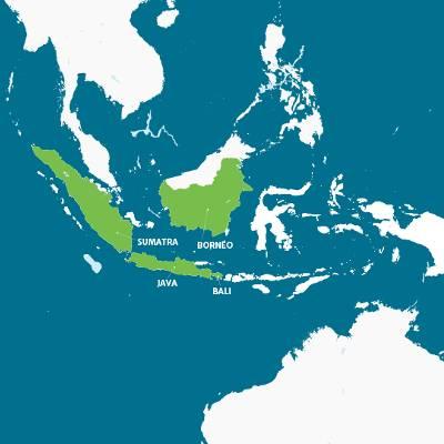 Carte d'Indonésie - Langur de Java