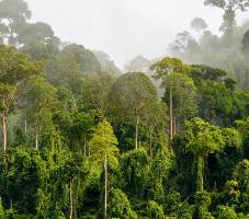 Habitat - Langur de Java