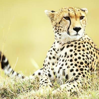 La conservation - ZooParc de Beauval