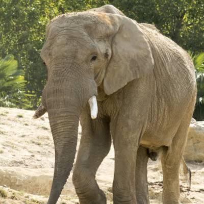 Les animaux - ZooParc de Beauval