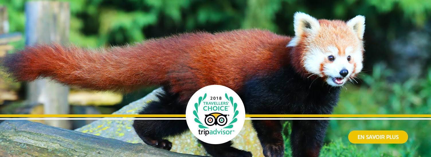 Dans le top 5 Tripadvisor - ZooParc de Beauval