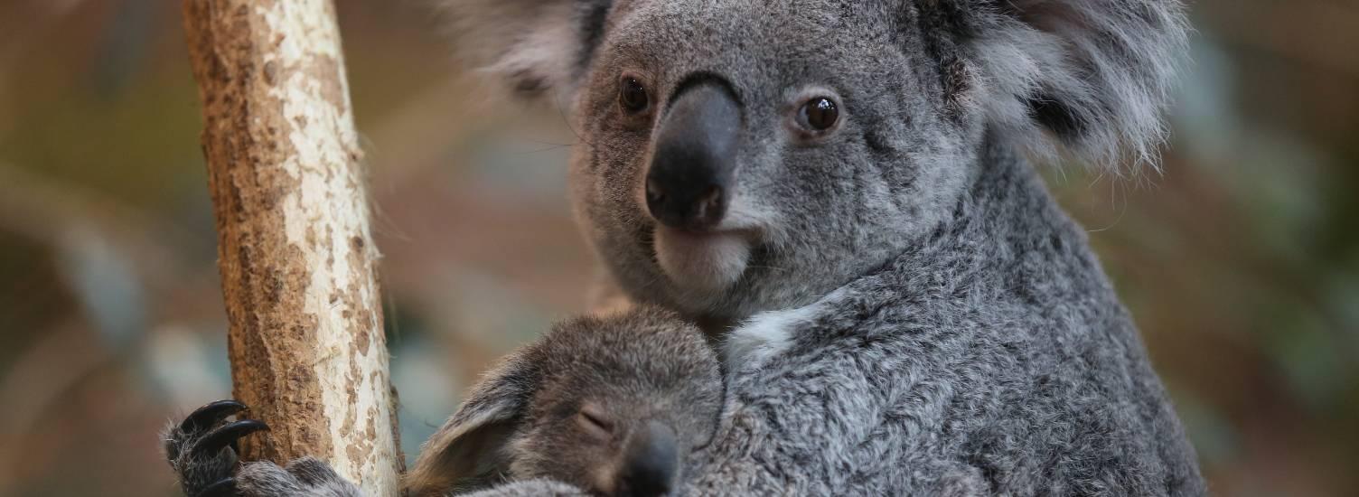 La sauvegarde et la protection <br> des espèces animales - ZooParc de Beauval