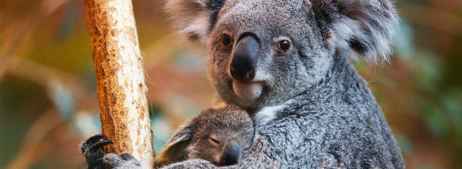 Contactez-nous - ZooParc de Beauval