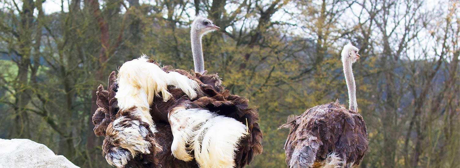 Questions fréquentes - ZooParc de Beauval