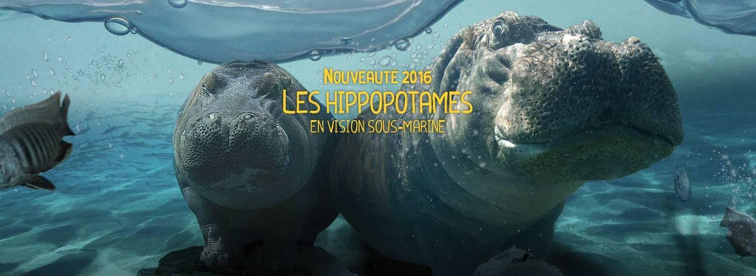 La Réserve des Hippopotames - Nouveauté 2016 - ZooParc de Beauval