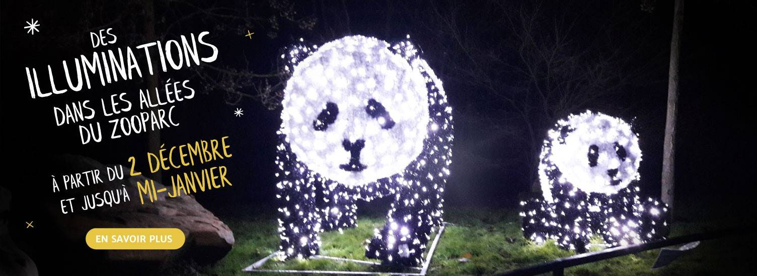 Noël féérique au ZooParc - ZooParc de Beauval