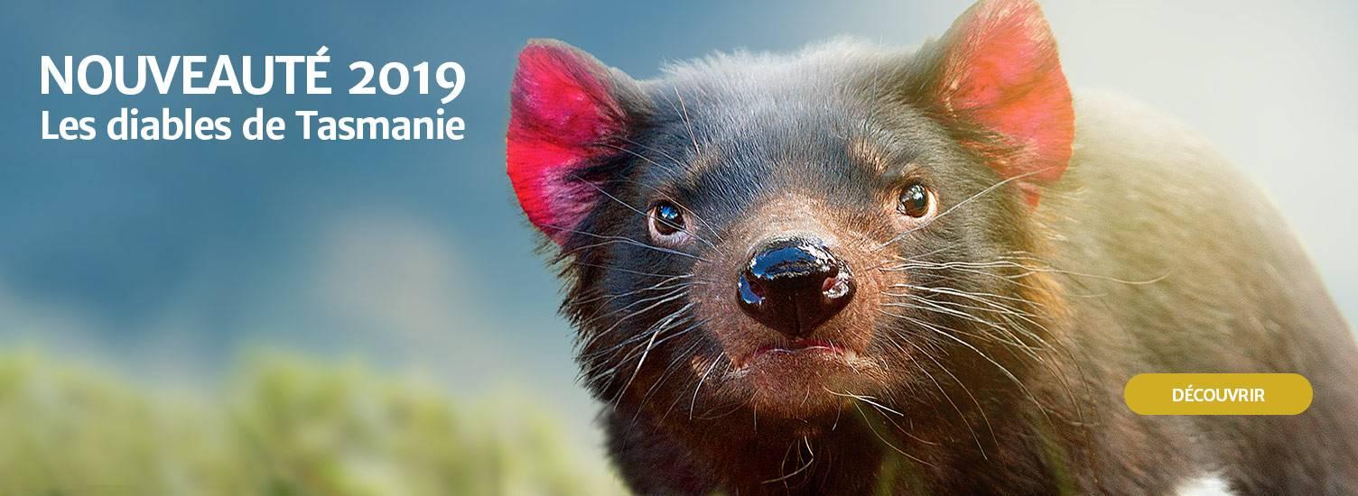 Diables de Tasmanie - Nouveauté 2019 - ZooParc de Beauval