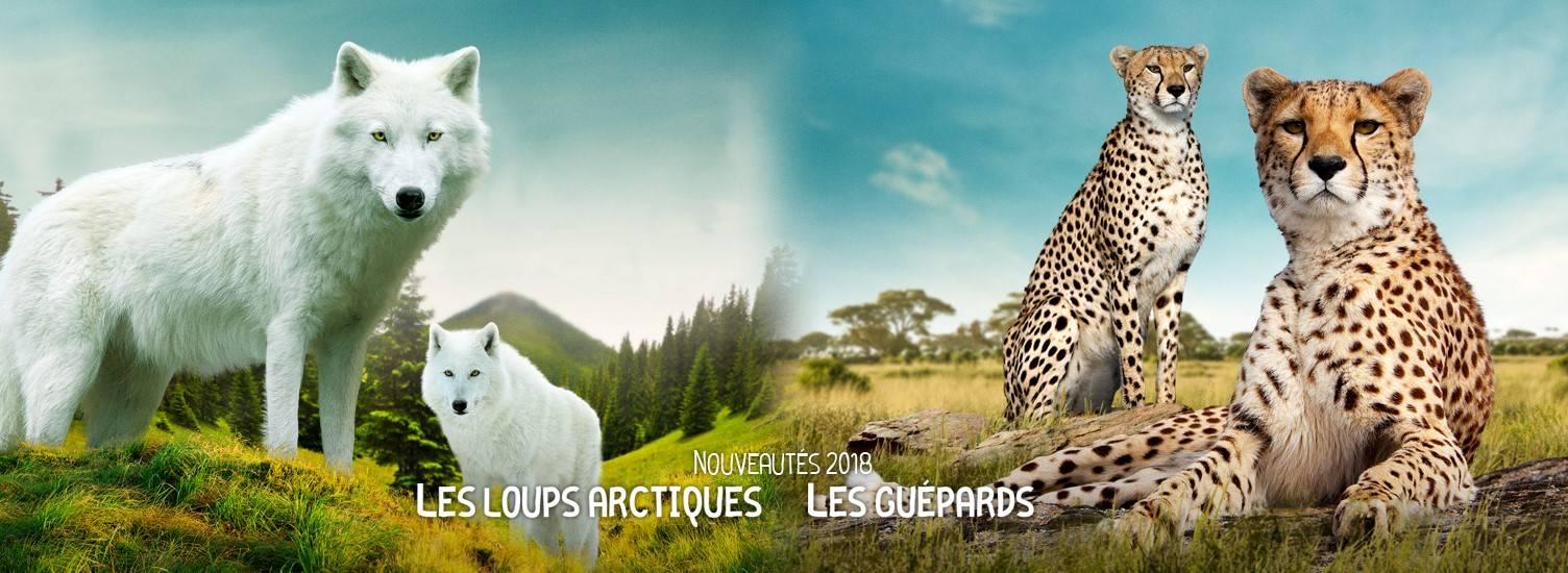Nouveauté 2018 - ZooParc de Beauval