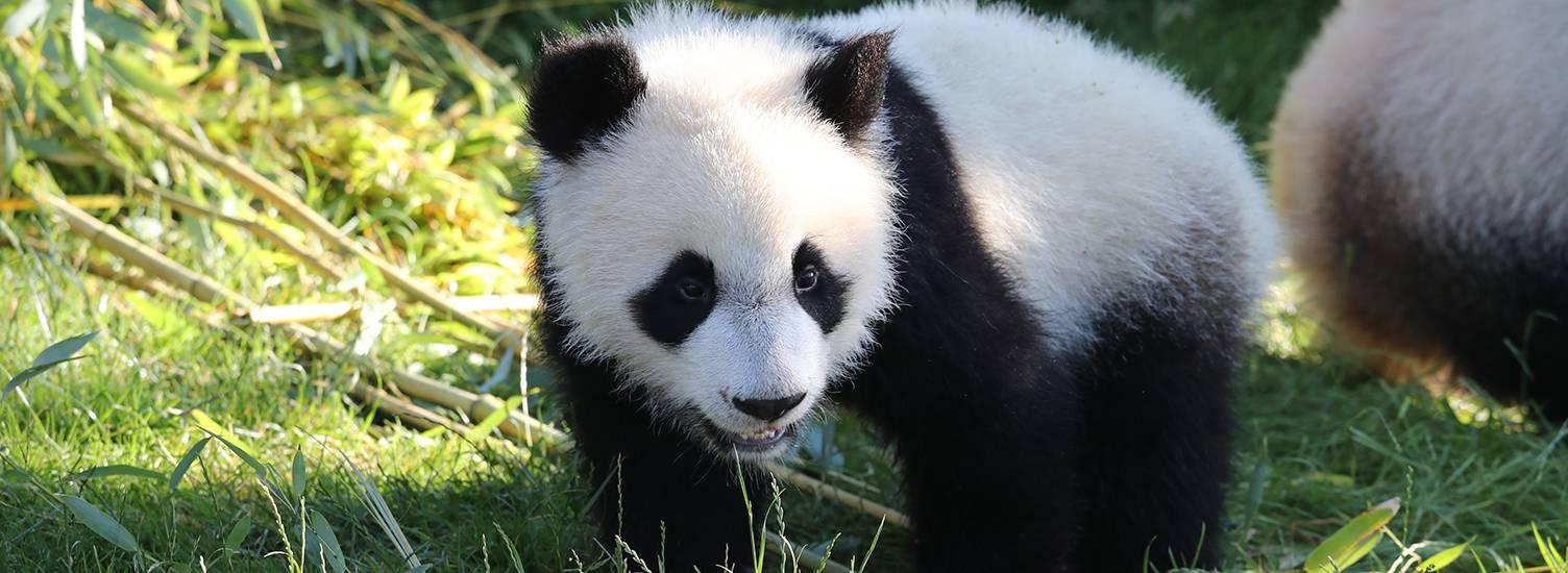 Les animaux extraordinaires - ZooParc de Beauval
