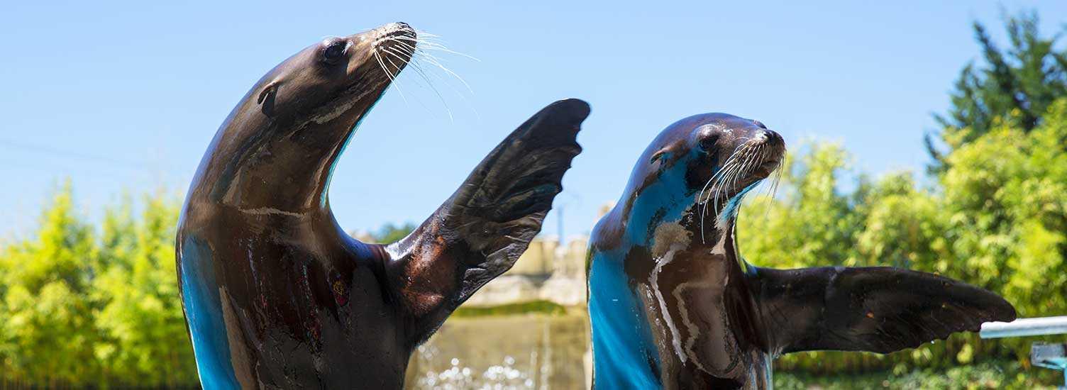 Préparez votre visite - ZooParc de Beauval