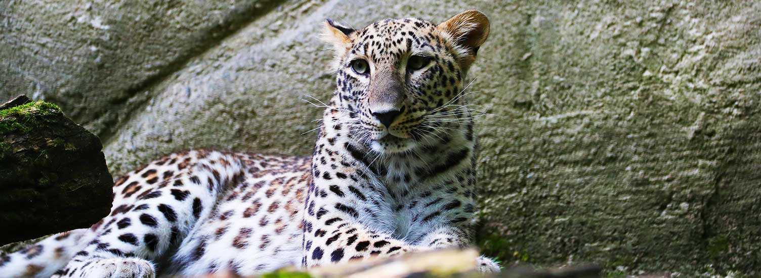 Règlement intérieur - ZooParc de Beauval