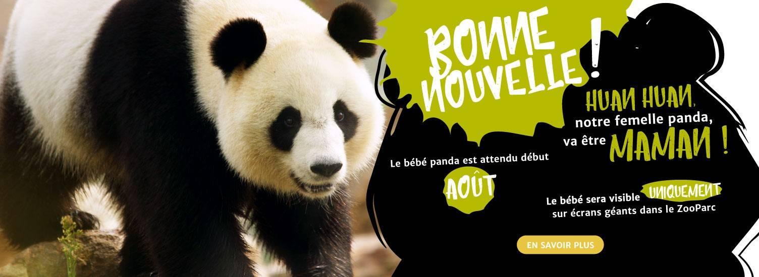 Huan huan maman ! - ZooParc de Beauval
