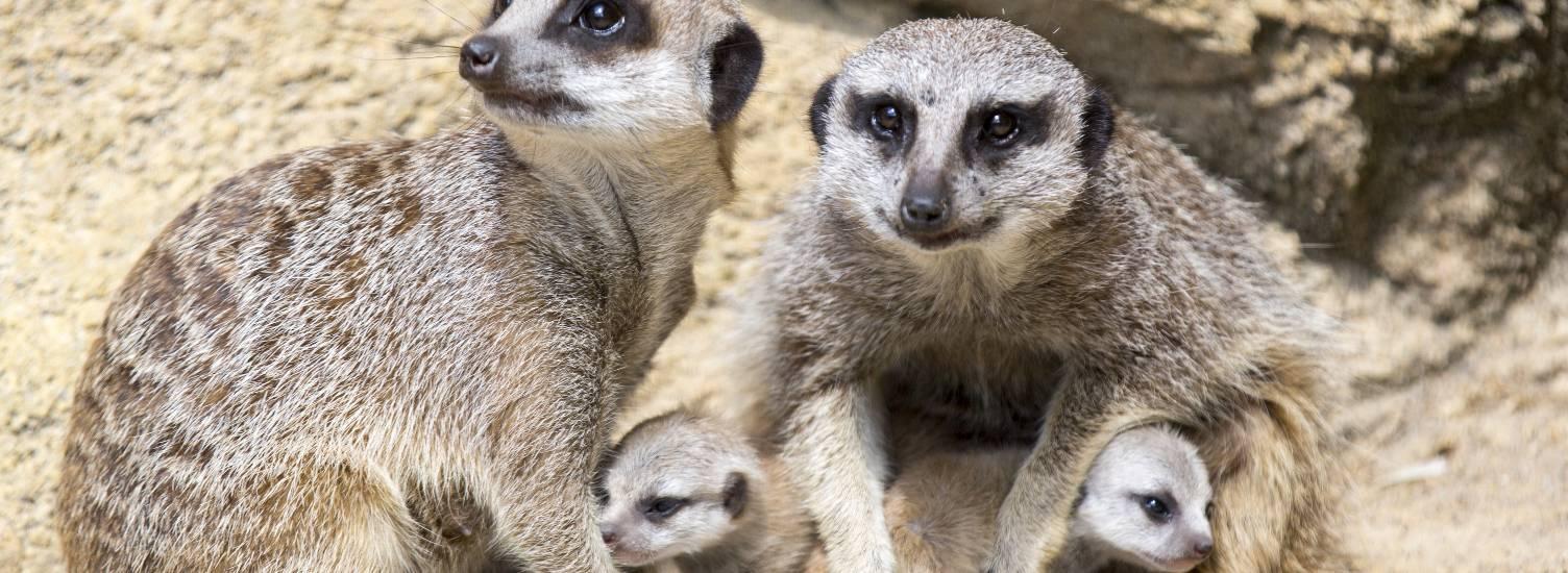Les réseaux sociaux en direct - ZooParc de Beauval