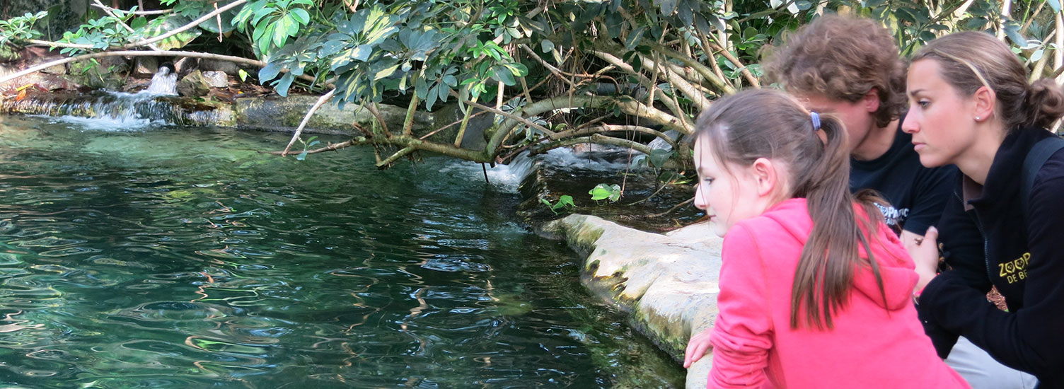 Soigneur Junior - Activités pour les enfants - ZooParc de Beauval