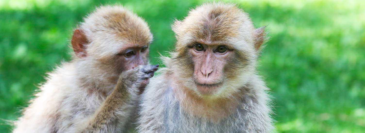 Suivez nous - ZooParc de Beauval