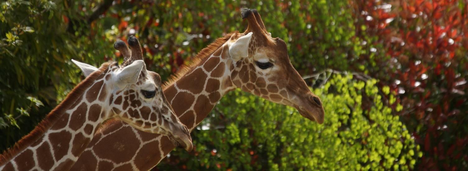 Visite guidée VIP <br>&laquo; Beauval en coulisses &raquo; - Activités pour les enfants - ZooParc de Beauval