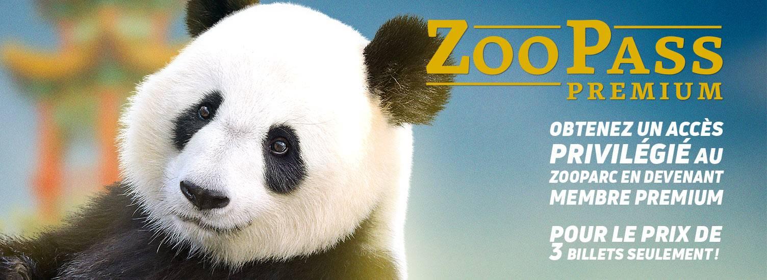 ZooPass Premium 1 an - ZooParc de Beauval