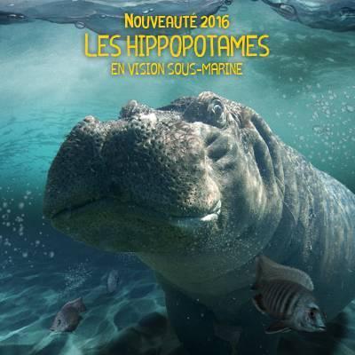 La Réserve des Hippopotames - ZooParc de Beauval