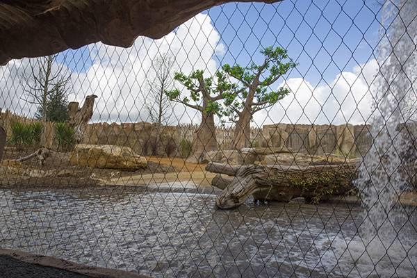 Terre des Lions - nouveauté 2017 - ZooParc de Beauval