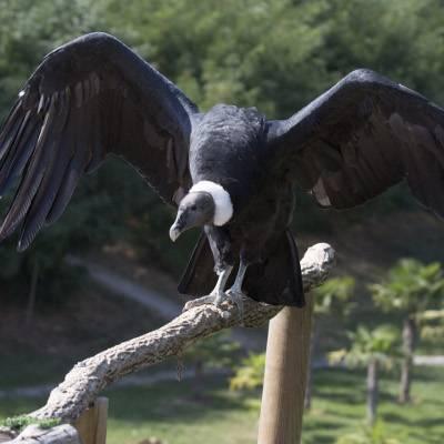 Les Maîtres des Airs - ZooParc de Beauval