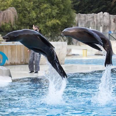 Odyssée des lions de mer - ZooParc de Beauval