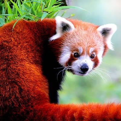 Parrainages - ZooParc de Beauval