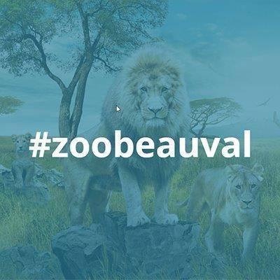 Mur social - ZooParc de Beauval