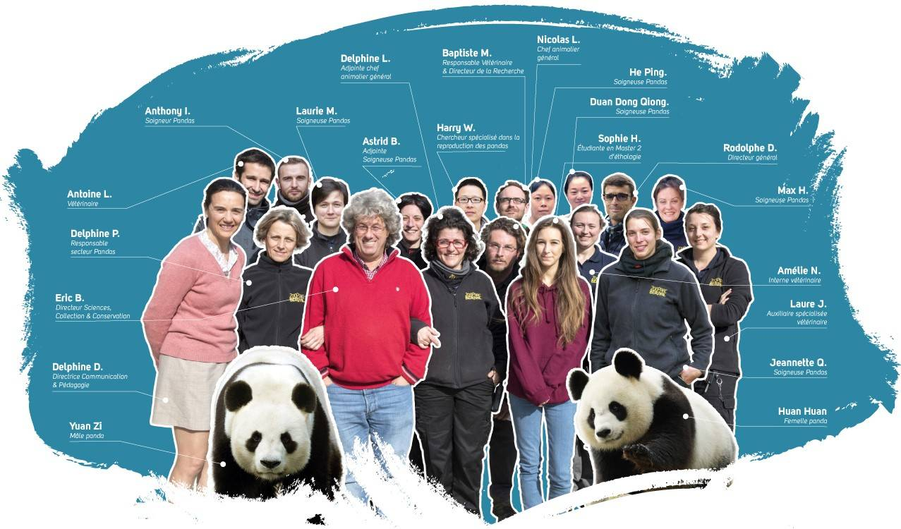 La Team Pandas - ZooParc de Beauval