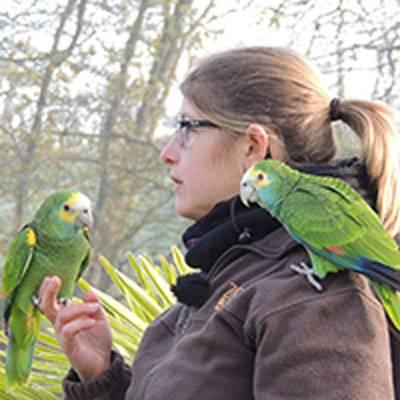 Amandine Diot - Responsable adjointe du spectacle d'oiseaux - ZooParc de Beauval