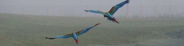 Perroquet - ZooParc de Beauval