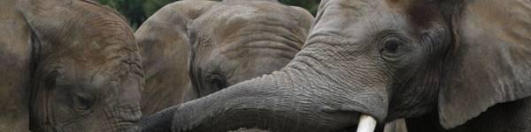 Éléphants - ZooParc de Beauval