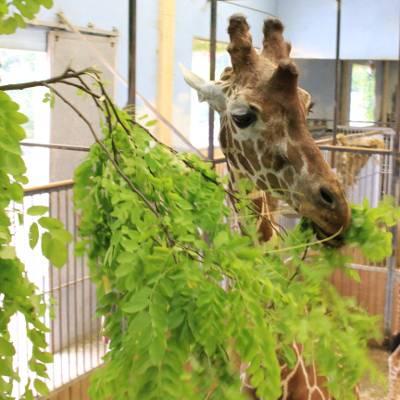 bâtiment de la savane africaine - ZooParc de Beauval